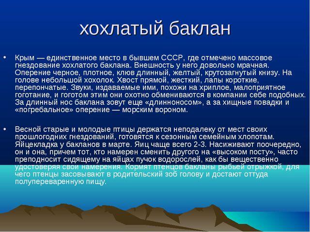 хохлатый баклан Крым — единственное место в бывшем СССР, где отмечено массово...