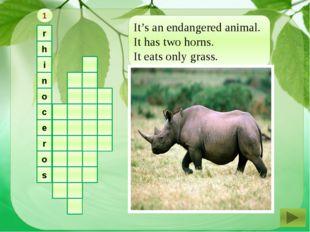 r h i n o c e r o s It's an endangered animal. It has two horns. It eats onl