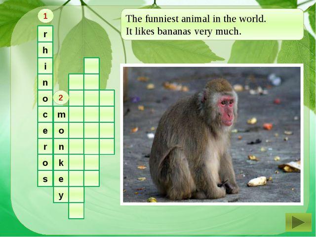 r h i n o c e r o s m o n k e y 1 2 The funniest animal in the world. It lik...