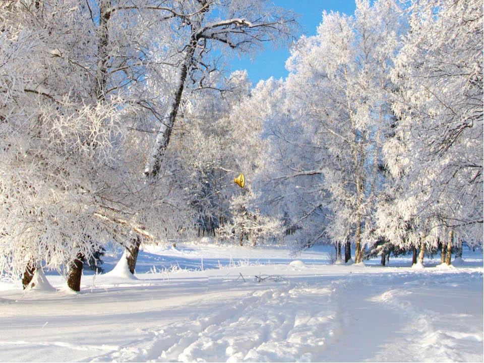 Заснеженный лес Приятно гулять по заснеженным тропкам Зимний лес стоит печаль...