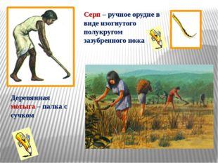 Деревянная мотыга – палка с сучком Серп – ручное орудие в виде изогнутого пол