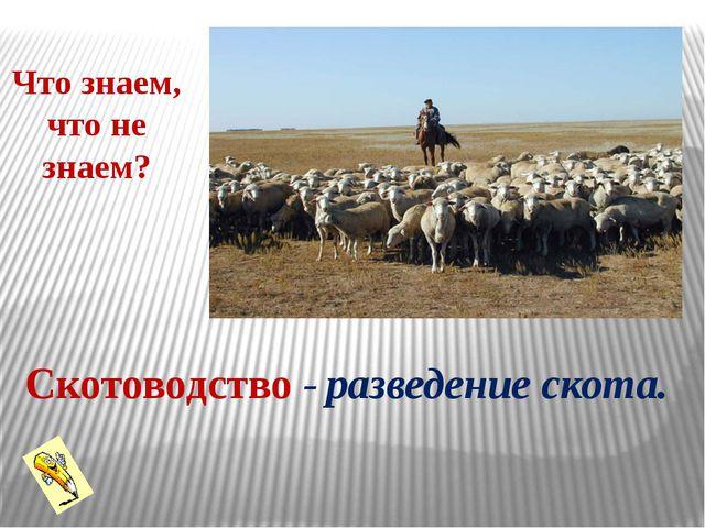 разведение скота. Что знаем, что не знаем? Скотоводство -