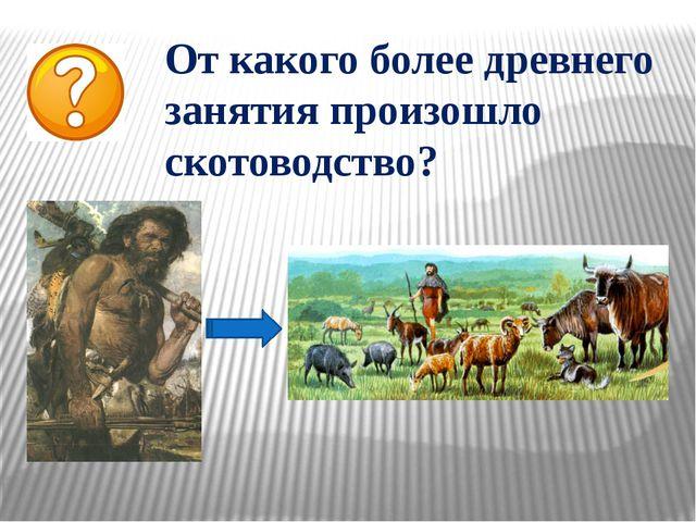 От какого более древнего занятия произошло скотоводство?