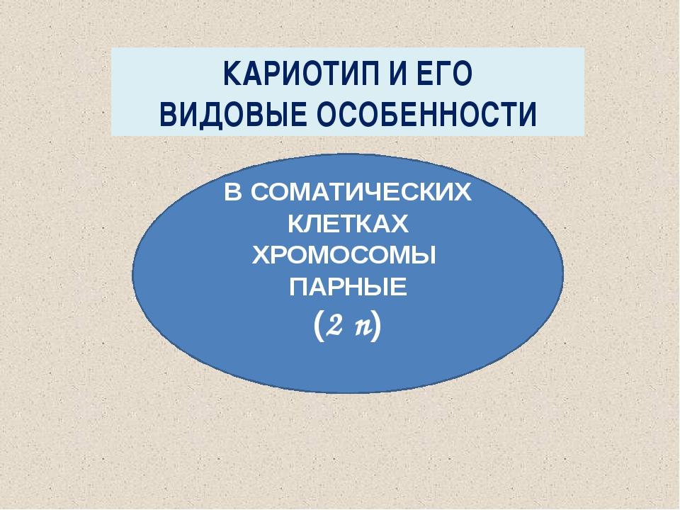 МИТОЗ ДЕЛЕНИЕ СОМАТИЧЕСКИХ КЛЕТОК