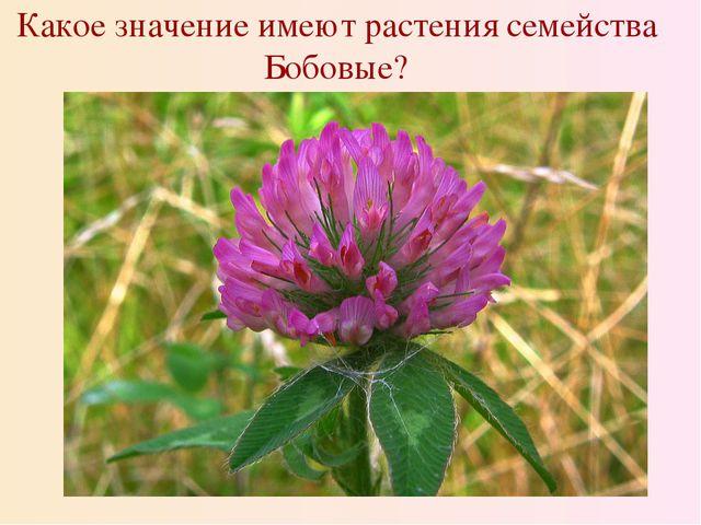 Какое значение имеют растения семейства Бобовые?