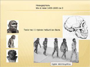 Тесік тас үңгірінен табылған бала. Неандерталь Ми көлемі 1400-1600 см 3 Адам