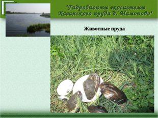 Животные пруда