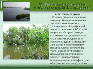 Растительность пруда В начале нашего исследования мы сразу обратили внимание