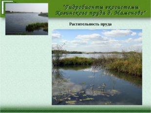 Растительность пруда