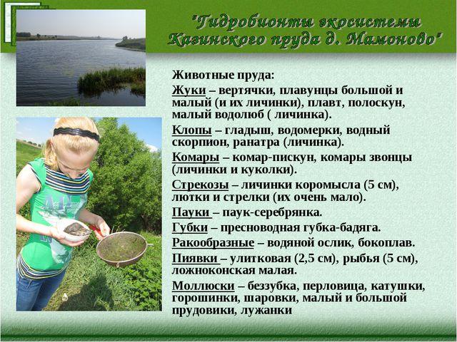 Животные пруда: Жуки – вертячки, плавунцы большой и малый (и их личинки), пла...