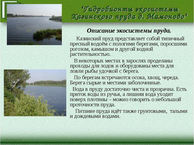 Описание экосистемы пруда. Казинский пруд представляет собой типичный пресный...