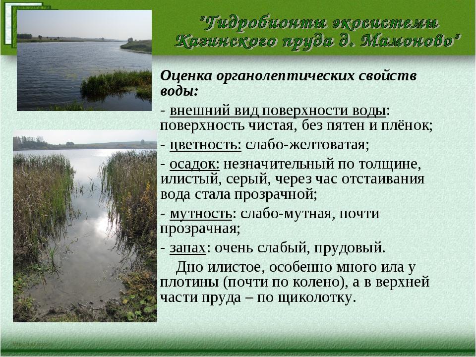 Оценка органолептических свойств воды: - внешний вид поверхности воды: поверх...