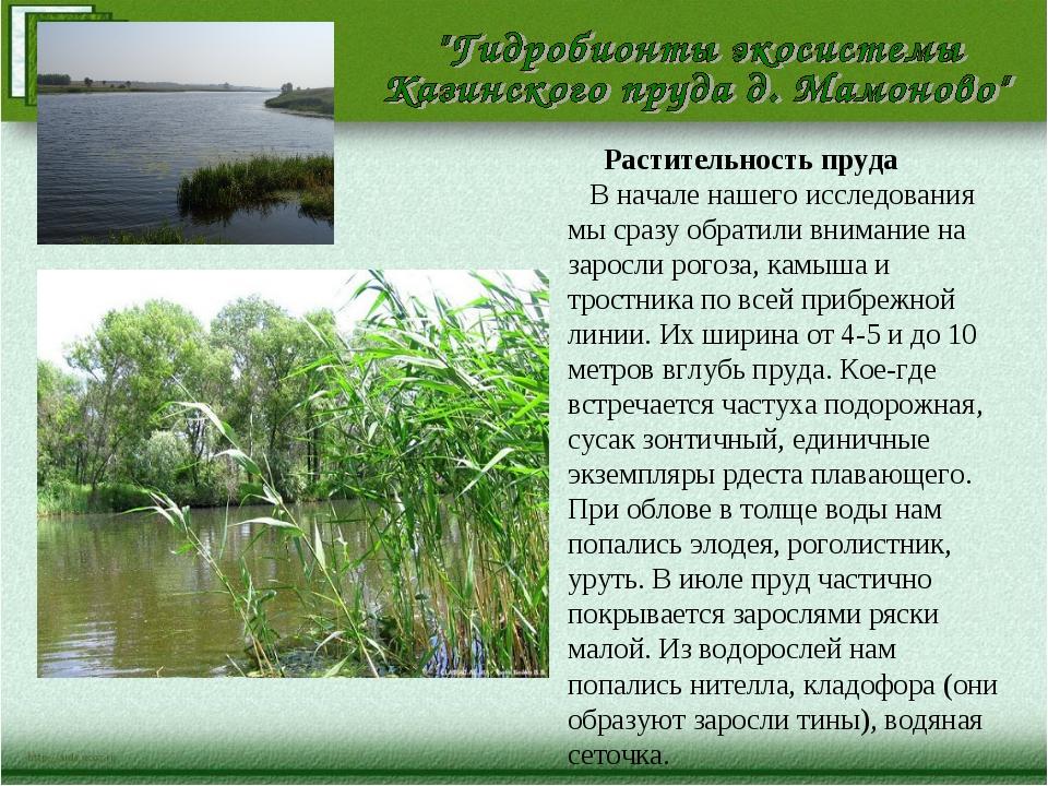 Растительность пруда В начале нашего исследования мы сразу обратили внимание...
