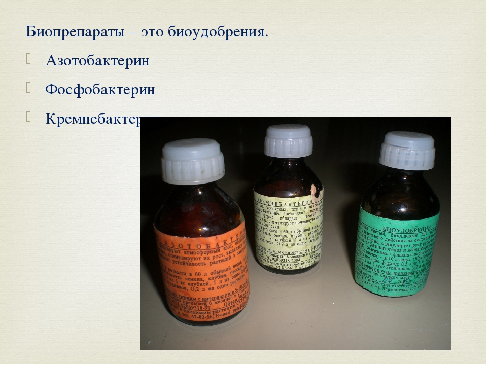 Биопрепараты – это биоудобрения. Азотобактерин Фосфобактерин Кремнебактерин