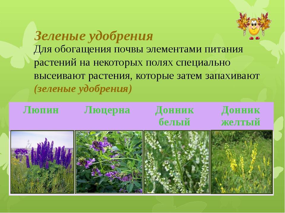 Зеленые удобрения