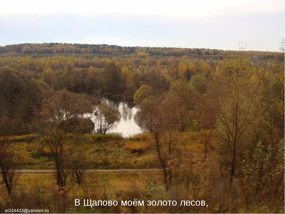 В Щапово моём золото лесов,