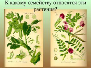 К какому семейству относятся эти растения?