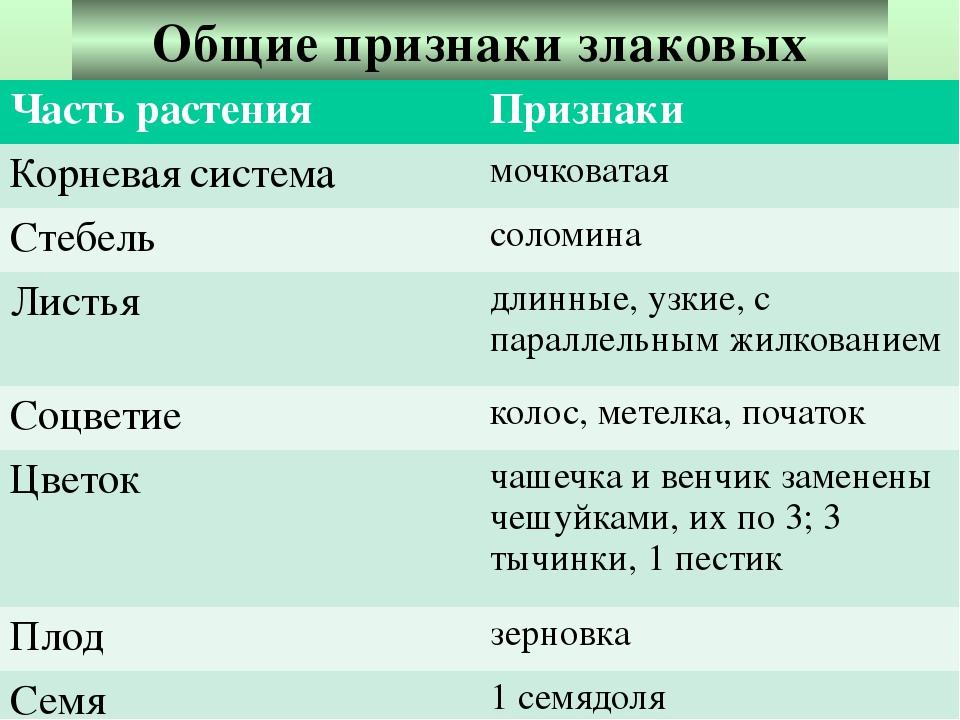 Общие признаки злаковых Часть растения Признаки Корневая система мочковатая С...