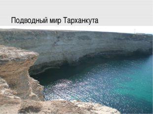 Подводный мир Тарханкута