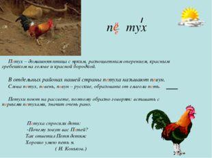 п тух Петух – домашняя птица с ярким, разноцветным оперением, красным гребешк