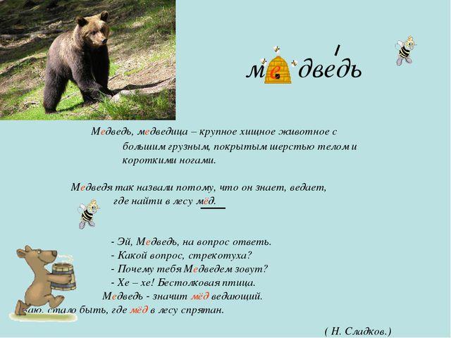 Медведь, медведица – крупное хищное животное с большим грузным, покрытым шер...
