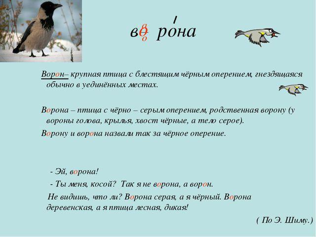 в рона Ворон– крупная птица с блестящим чёрным оперением, гнездящаяся обычно...