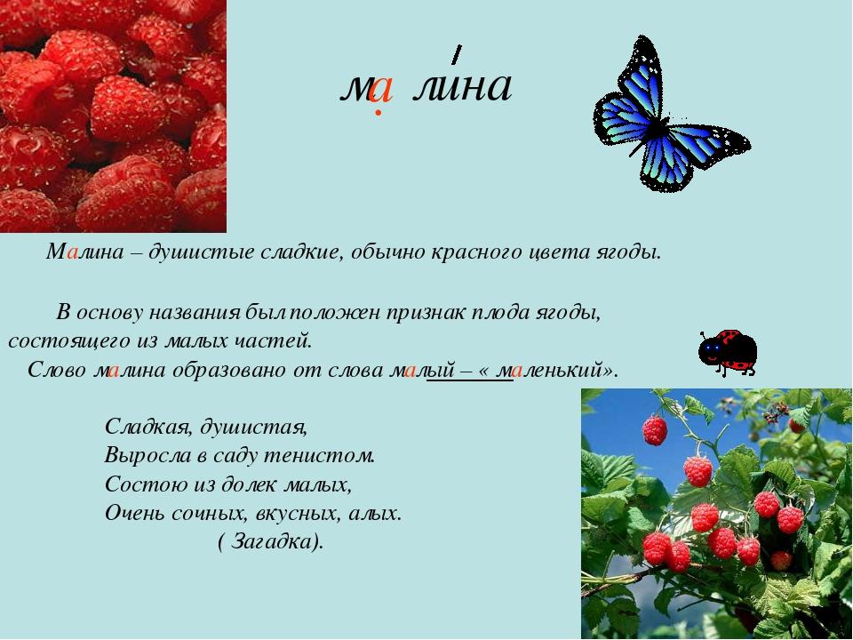 м лина Малина – душистые сладкие, обычно красного цвета ягоды. В основу назва...