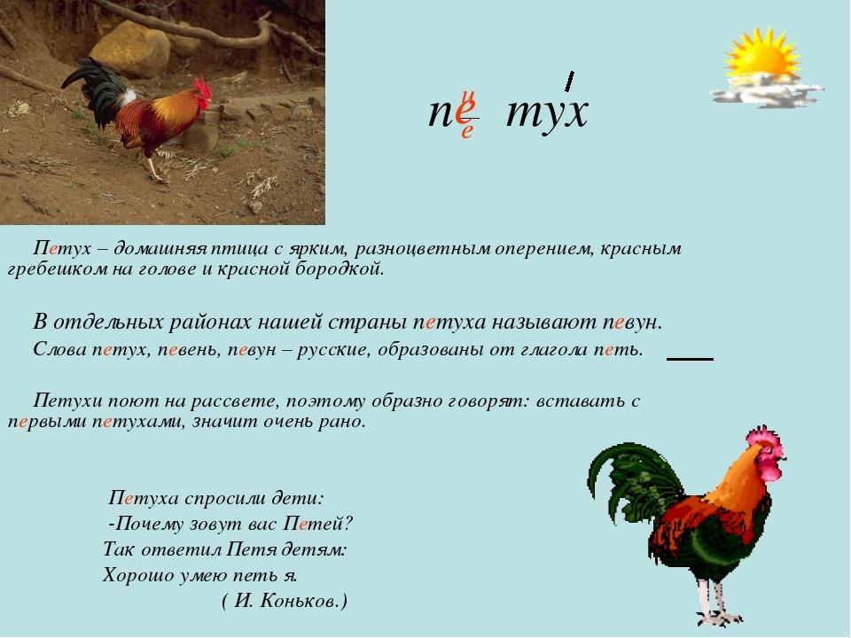 п тух Петух – домашняя птица с ярким, разноцветным оперением, красным гребешк...