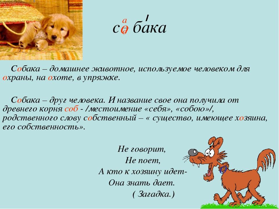 с бака Собака – домашнее животное, используемое человеком для охраны, на охот...