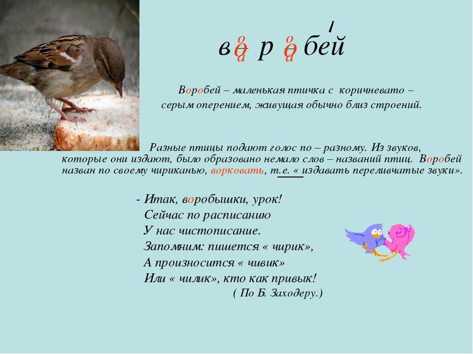 в р бей Воробей – маленькая птичка с коричневато – серым оперением, живущая о...