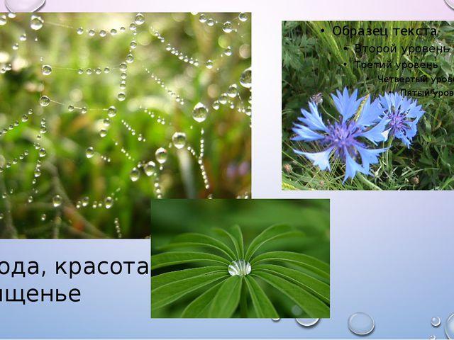 Природа, красота, восхищенье