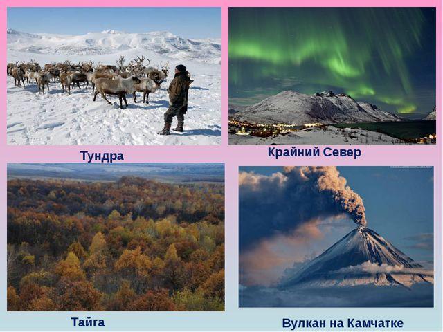 Тундра Крайний Север Тайга Вулкан на Камчатке