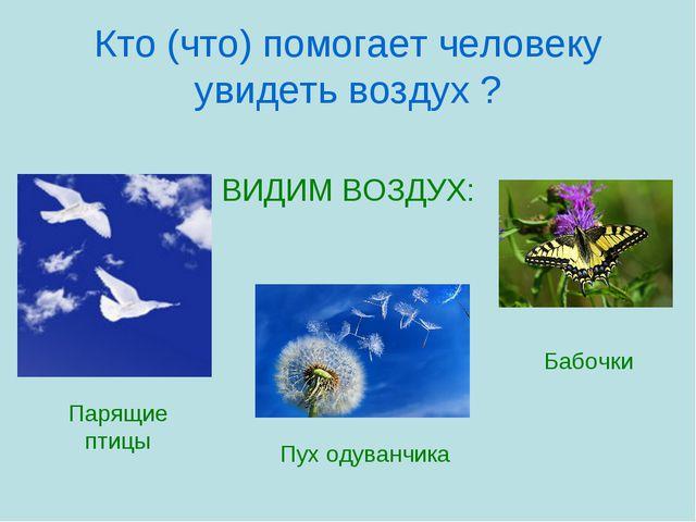 Кто (что) помогает человеку увидеть воздух ? ВИДИМ ВОЗДУХ: Парящие птицы Пух...