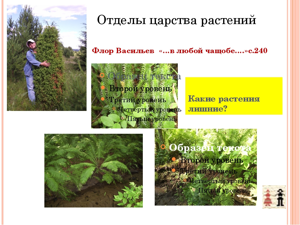 Отделы царства растений Флор Васильев «…в любой чащобе….»с.240 Какие растения...