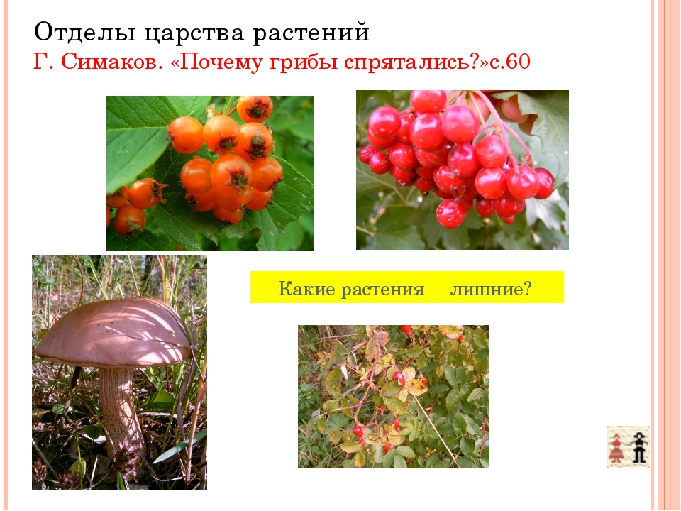 Какие растения лишние? Отделы царства растений Г. Симаков. «Почему грибы спр...