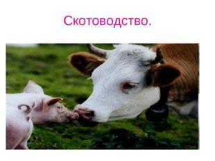 Скотоводство.