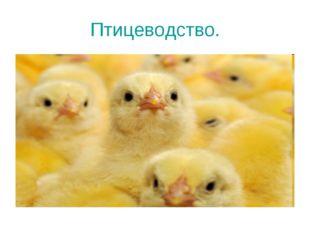 Птицеводство.