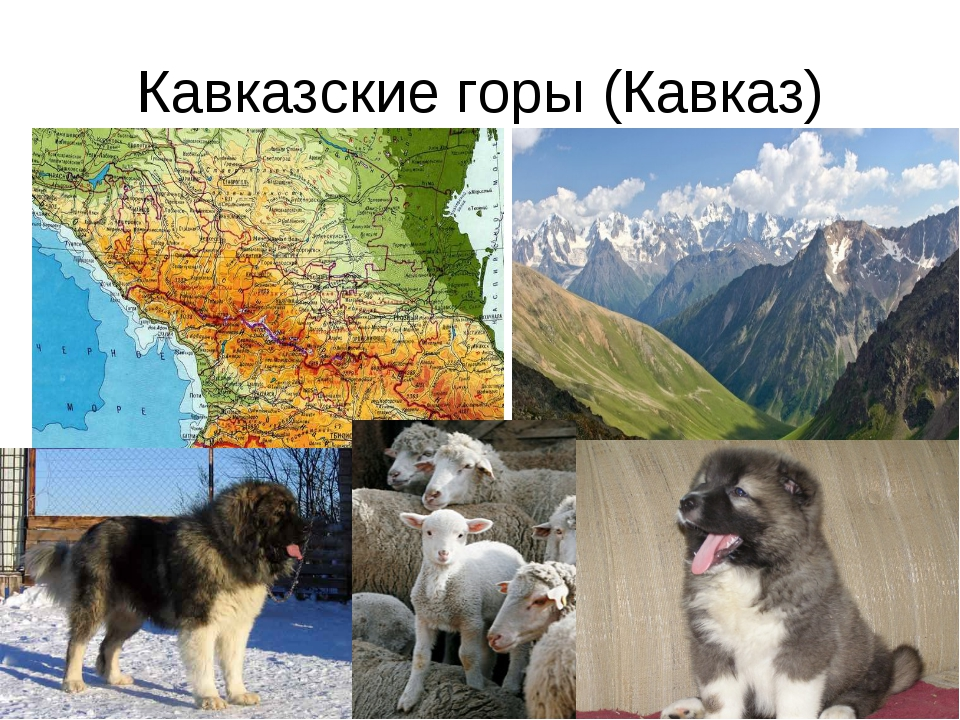 Кавказские горы (Кавказ)