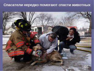 Спасатели нередко помогают спасти животных *