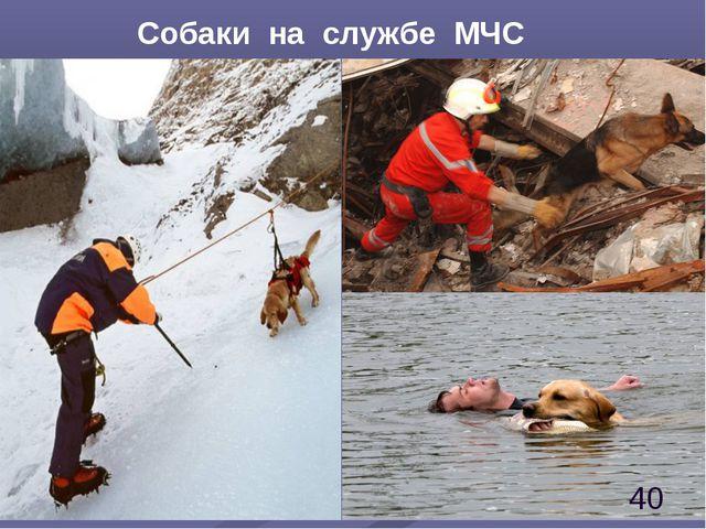 Собаки на службе МЧС *