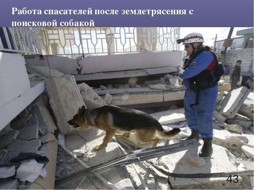 Работа спасателей после землетрясения с поисковой собакой *