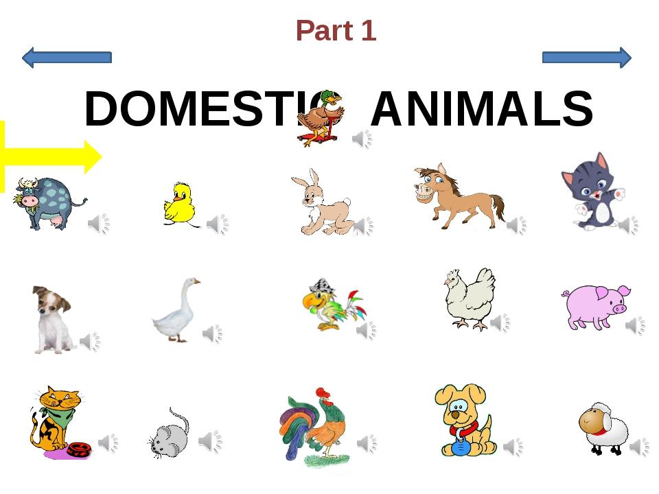 a puppy a cow a chicken a kitten a horse a puppy a parrot a hen a sheep a du...