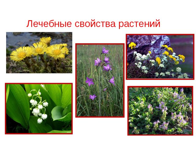 Лечебные свойства растений