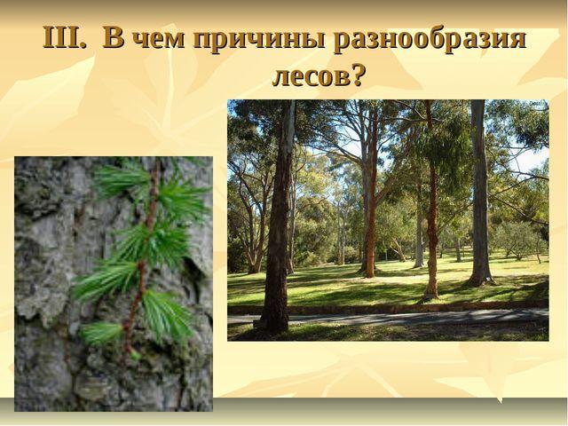 III. В чем причины разнообразия лесов?