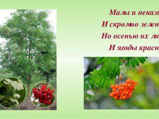 Малы и неказисты И скромно зеленеют, Но осенью их листья И ягоды краснеют.
