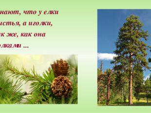 Все знают, что у елки Не листья, а иголки, И так же, как она С иголками ...