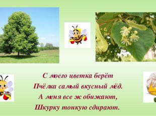 С моего цветка берёт Пчёлка самый вкусный мёд. А меня все ж обижают, Шкурку