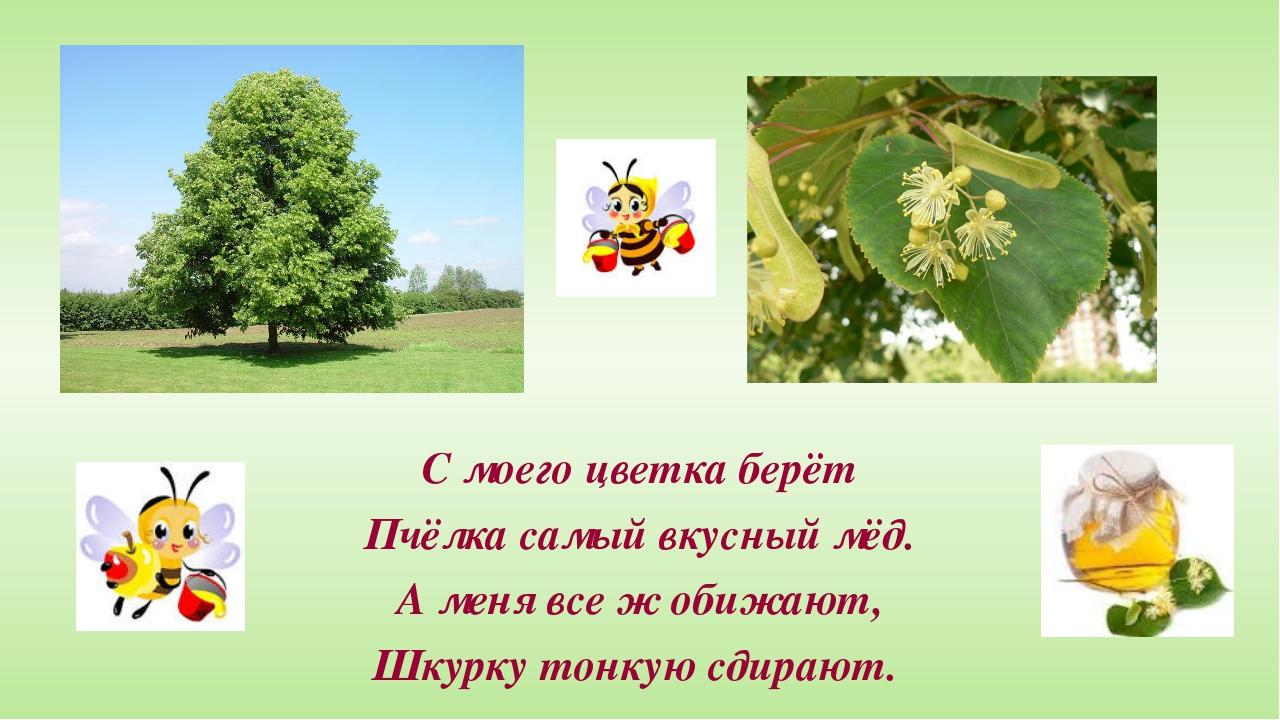 С моего цветка берёт Пчёлка самый вкусный мёд. А меня все ж обижают, Шкурку...