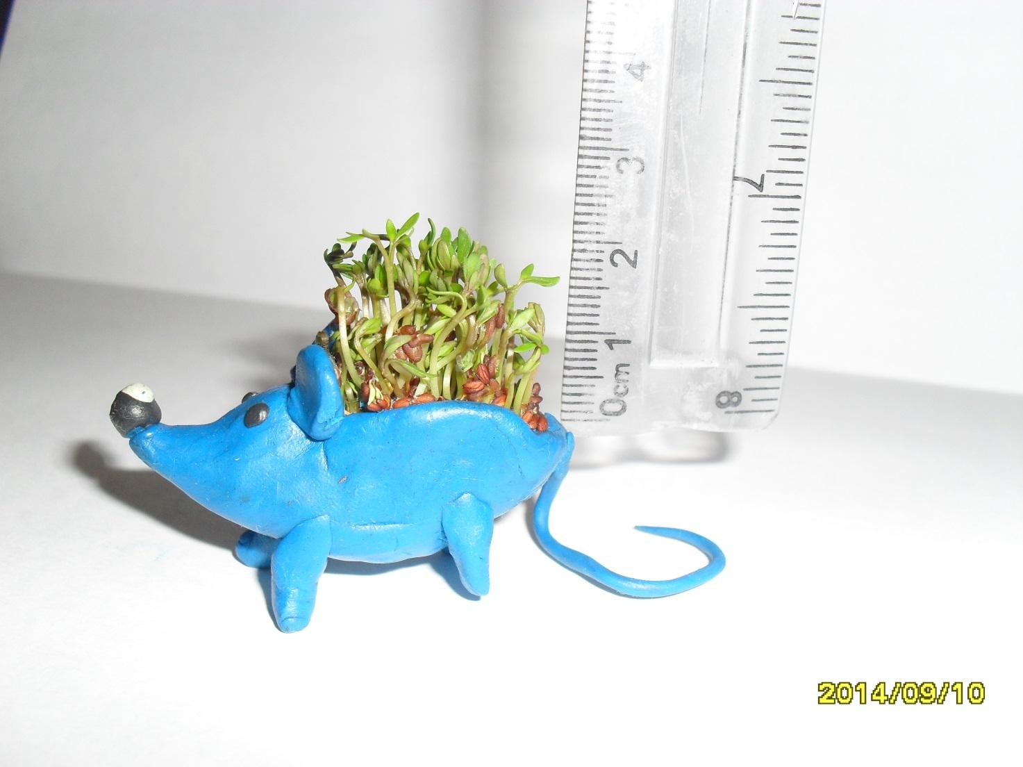 I:\кресс-салат\Оля\SDC16973.JPG