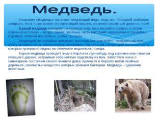 Название «медведь» означает «ведающий мёд», ведь он – большой любитель слад